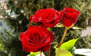 Je vous demande de bien méditer sur ces paroles beautiful-flower-2-300x187